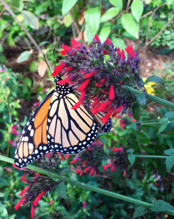monarch-fl.jpg